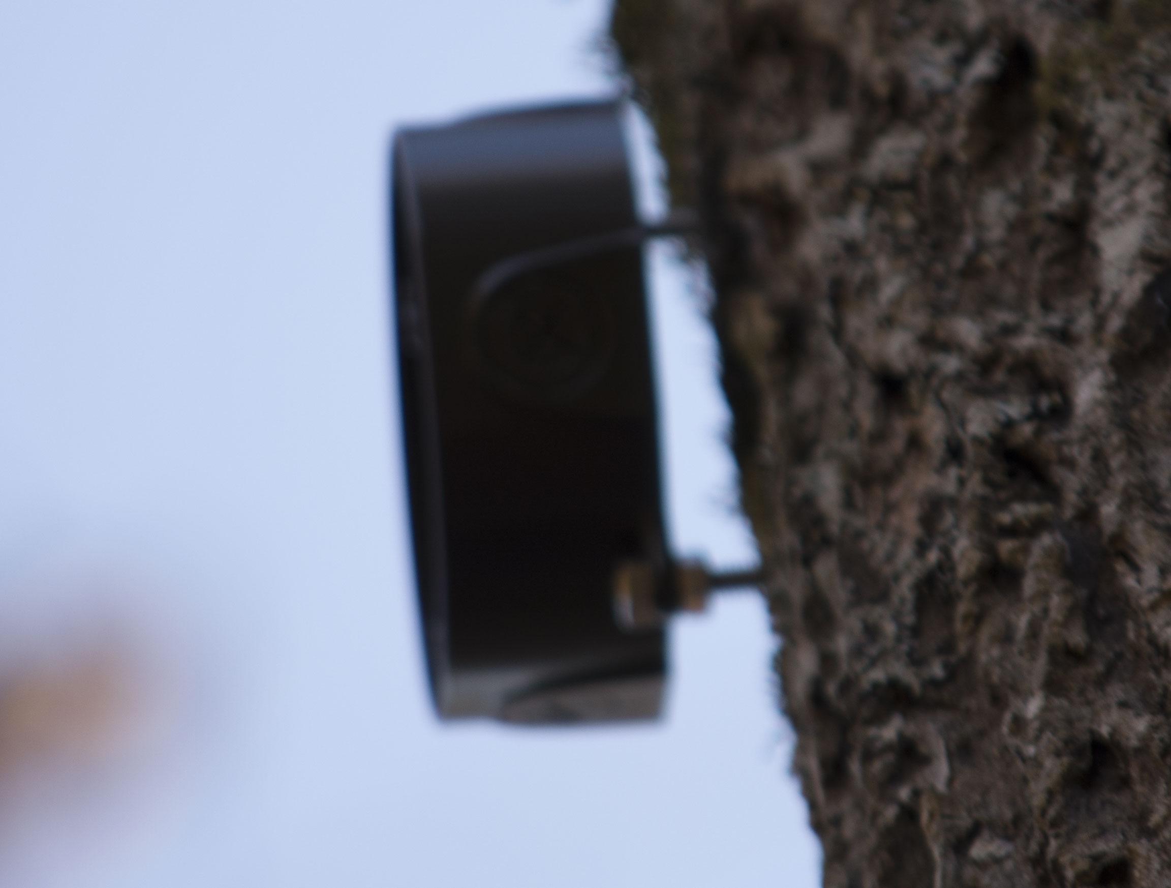 Junction Box On Tree